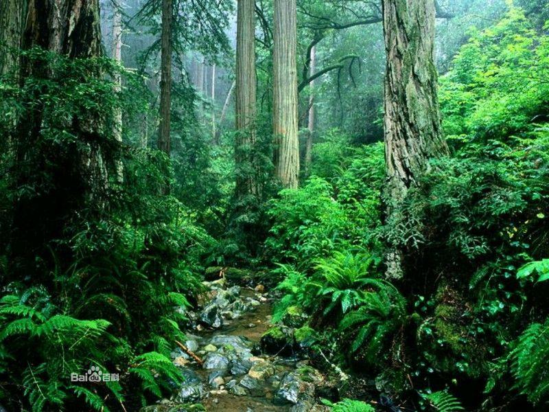 橡胶木就是生产橡胶的树木,属于亚热带树种,多分布于我国南部和东南亚